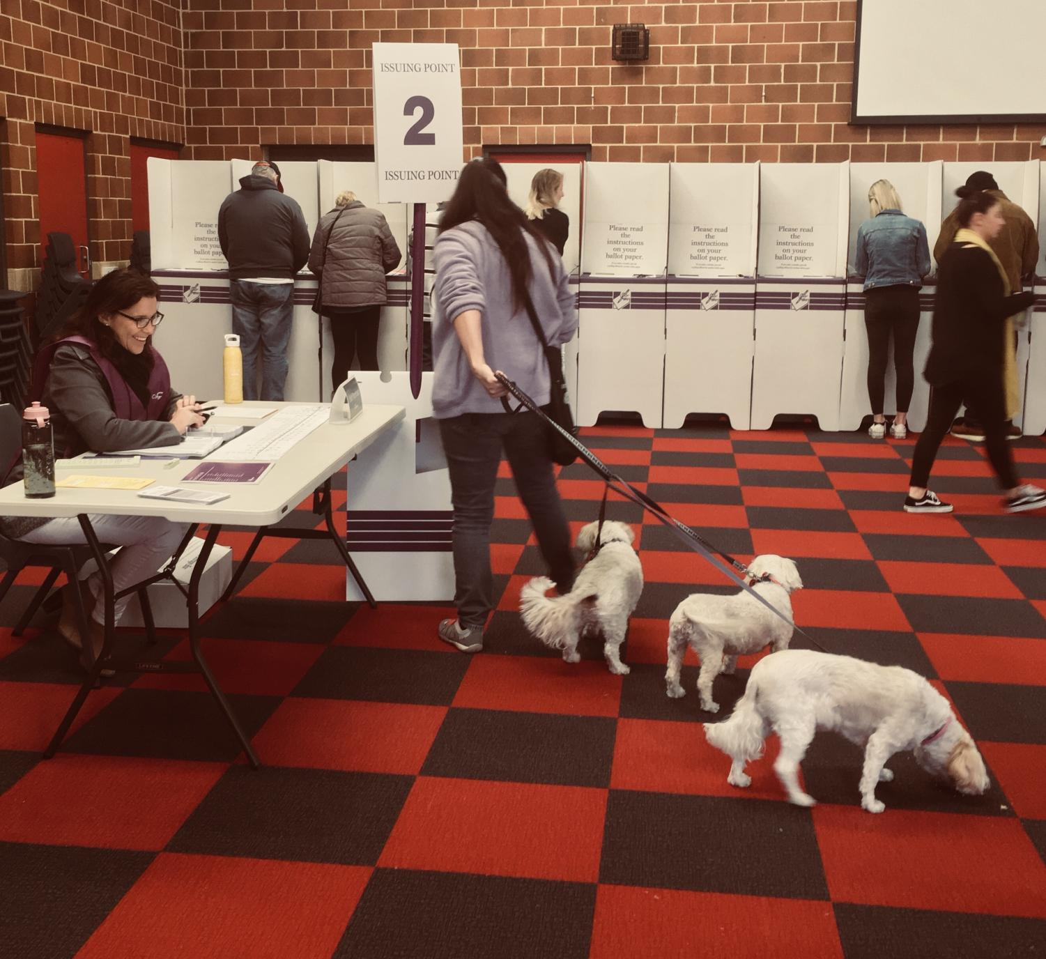 A woman and her dogs exercising their democratic rights in Pearce.