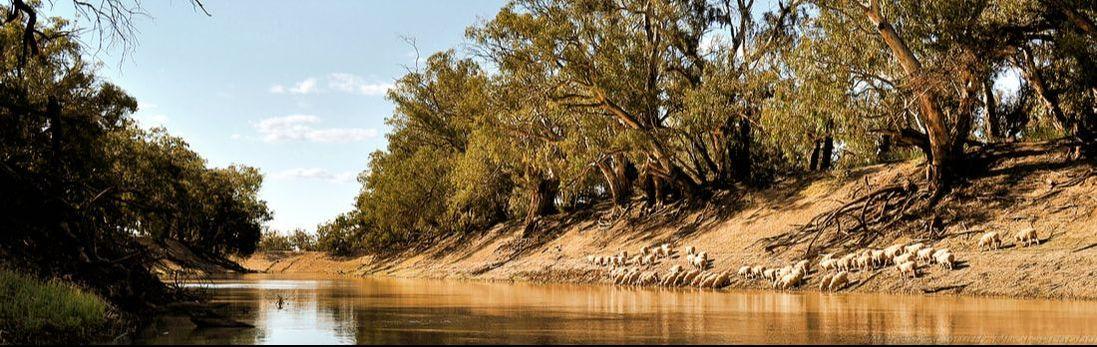 Darling River at Tolarno Station