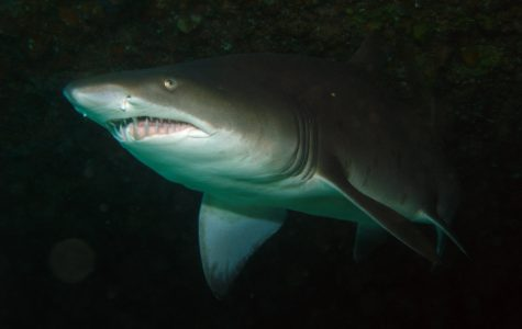 Big sharks fall but more on Queensland horizon